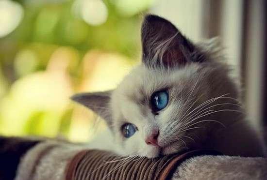 بالصور اجمل الصور للقطط في العالم , صور للقطط من اجمل الصور في العالم 6720 10