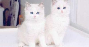 صوره اجمل الصور للقطط في العالم , صور للقطط من اجمل الصور في العالم