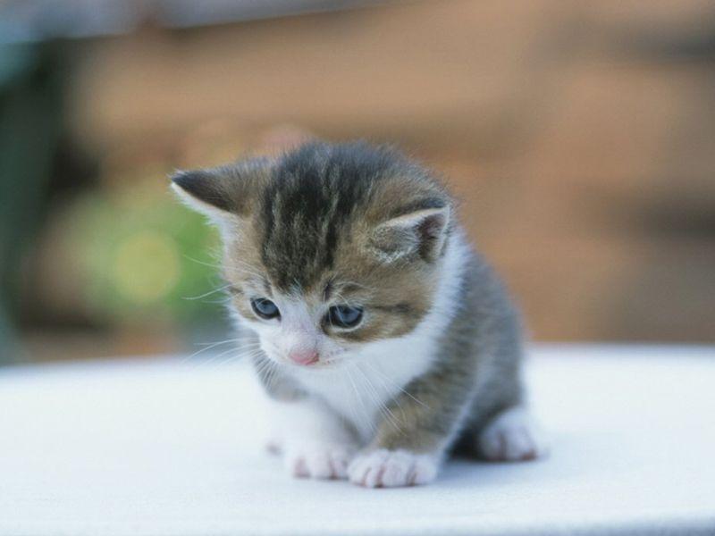 بالصور اجمل الصور للقطط في العالم , صور للقطط من اجمل الصور في العالم 6720 2