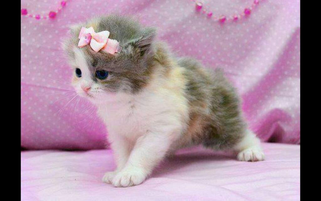 بالصور اجمل الصور للقطط في العالم , صور للقطط من اجمل الصور في العالم 6720 3