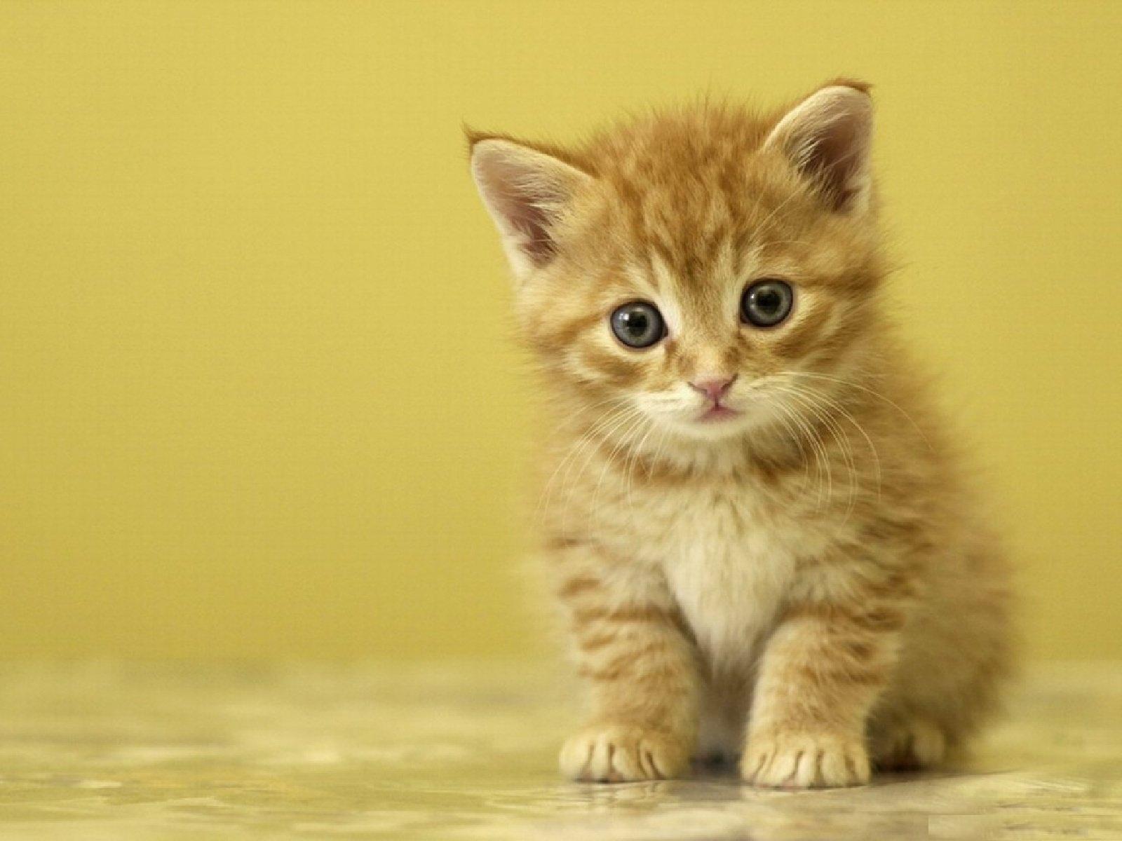 بالصور اجمل الصور للقطط في العالم , صور للقطط من اجمل الصور في العالم 6720 4