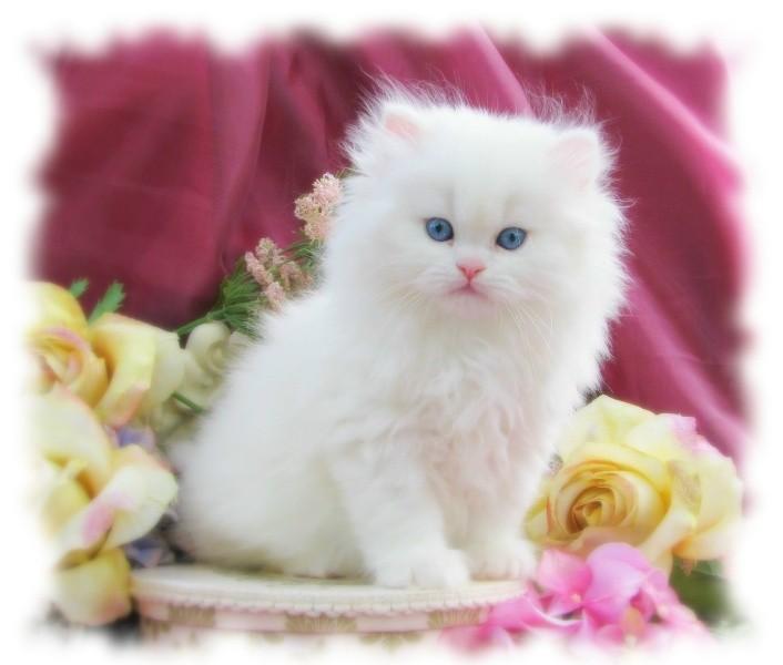 بالصور اجمل الصور للقطط في العالم , صور للقطط من اجمل الصور في العالم 6720 6