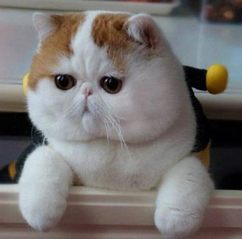 بالصور اجمل الصور للقطط في العالم , صور للقطط من اجمل الصور في العالم 6720 8