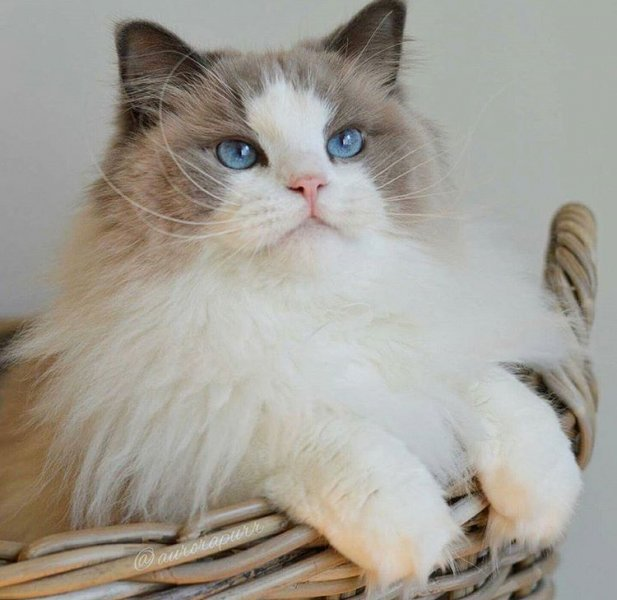 بالصور اجمل الصور للقطط في العالم , صور للقطط من اجمل الصور في العالم 6720 9