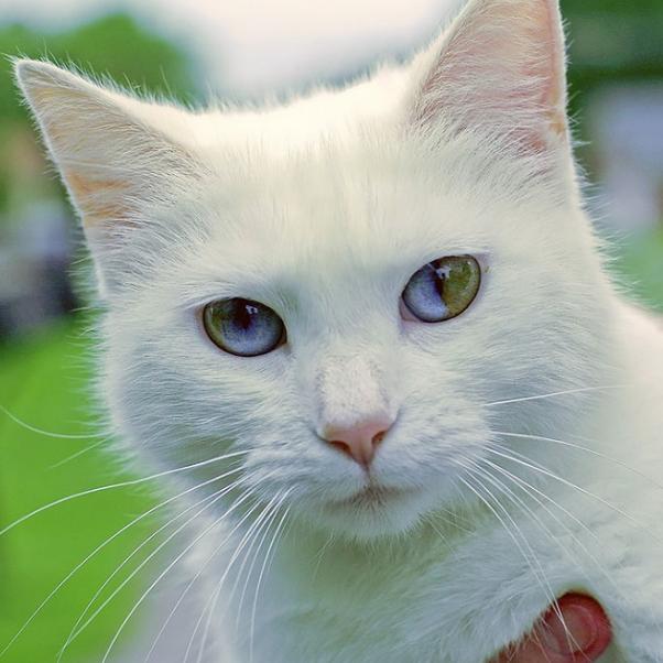 بالصور اجمل الصور للقطط في العالم , صور للقطط من اجمل الصور في العالم 6720