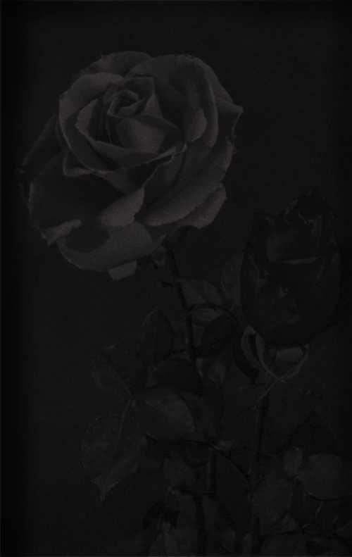 صور لون اسود صورة اللون الانيق الاسود عبارات