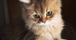 صورة صور قطط كيوت , لعشاق القطط اليكم صور لاجمل واشهر قطط العالم