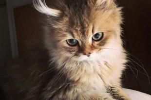 صوره صور قطط كيوت , لعشاق القطط اليكم صور لاجمل واشهر قطط العالم