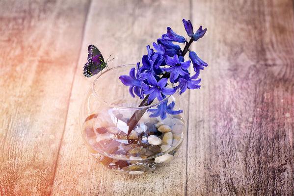 بالصور اجمل صور الورد , صور لارق انواع الزهور سهلة الزراعة في الحدائق المنزلية 2464 10