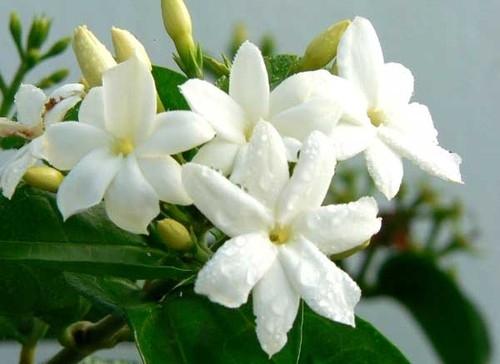 بالصور اجمل صور الورد , صور لارق انواع الزهور سهلة الزراعة في الحدائق المنزلية 2464 11