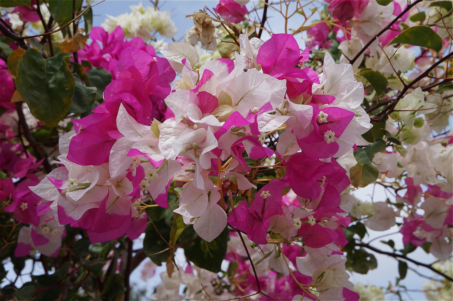 بالصور اجمل صور الورد , صور لارق انواع الزهور سهلة الزراعة في الحدائق المنزلية 2464 13