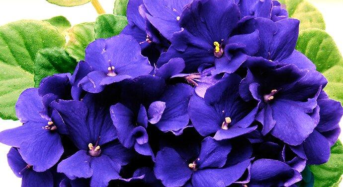 بالصور اجمل صور الورد , صور لارق انواع الزهور سهلة الزراعة في الحدائق المنزلية 2464 8