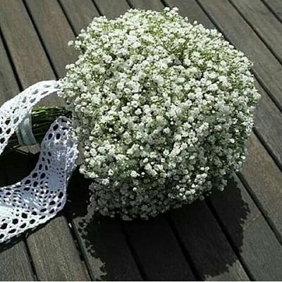 بالصور اجمل صور الورد , صور لارق انواع الزهور سهلة الزراعة في الحدائق المنزلية 2464 9