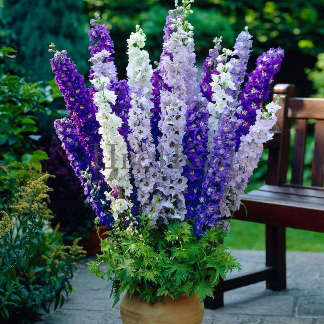 بالصور اجمل صور الورد , صور لارق انواع الزهور سهلة الزراعة في الحدائق المنزلية