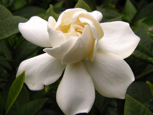 صور اجمل صور الورد , صور لارق انواع الزهور