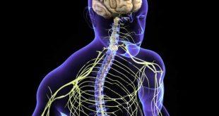 بالصور علاج الاعصاب , اسباب واعراض ضعف الاعصاب وطرق الوقاية والعلاج 2937 310x165