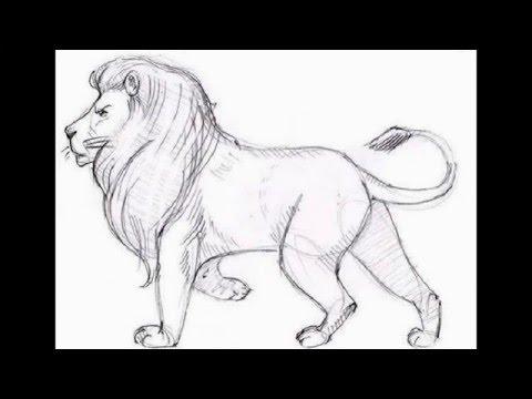 صور رسم وجه اسد , تعلم اسرع طريقة لرسم الاسد