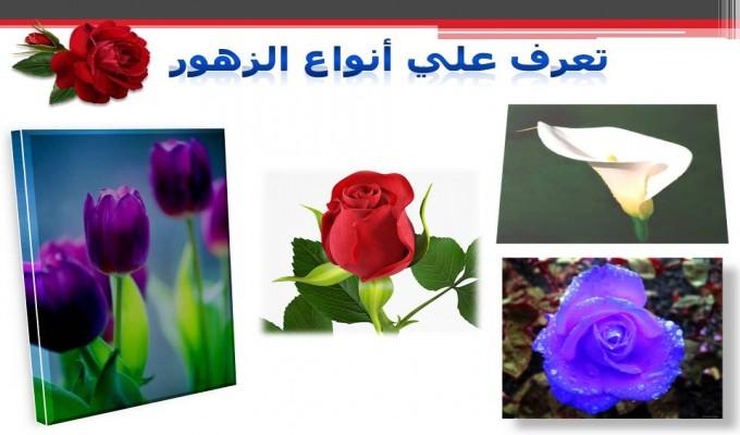 صور انواع الزهور واسمائها , احلى الزهور ولا اجمل