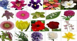 صورة انواع الزهور واسمائها , احلى الزهور ولا اجمل