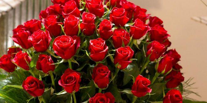 بالصور صور اجمل الزهور , صور الورد الملون الجميل 13824 12 660x330