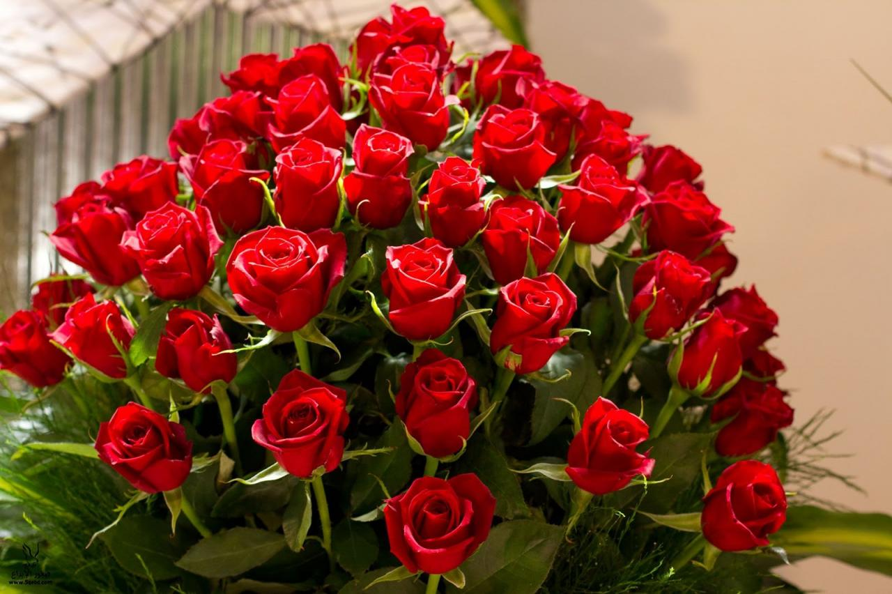 صور صور اجمل الزهور , صور الورد الملون الجميل