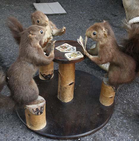 بالصور صور حيوانات مضحكة , اضحك مع لقطات نادرة وطريفة للحيوانات 5978 1
