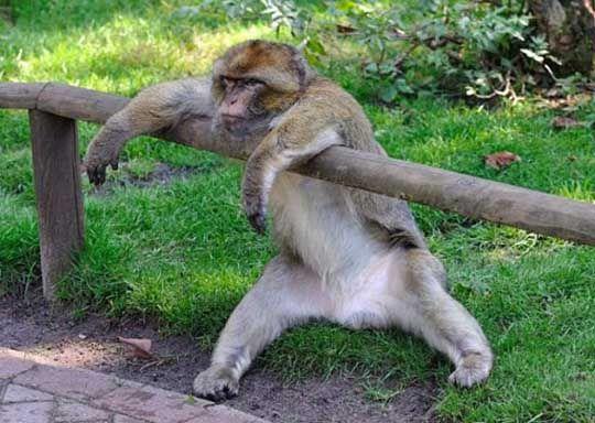بالصور صور حيوانات مضحكة , اضحك مع لقطات نادرة وطريفة للحيوانات 5978 11