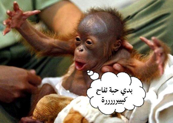 بالصور صور حيوانات مضحكة , اضحك مع لقطات نادرة وطريفة للحيوانات 5978 12