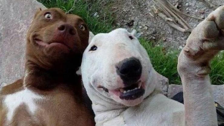 بالصور صور حيوانات مضحكة , اضحك مع لقطات نادرة وطريفة للحيوانات 5978 13