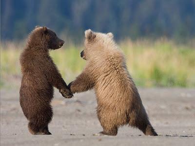 بالصور صور حيوانات مضحكة , اضحك مع لقطات نادرة وطريفة للحيوانات 5978 14