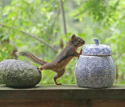 بالصور صور حيوانات مضحكة , اضحك مع لقطات نادرة وطريفة للحيوانات 5978 15