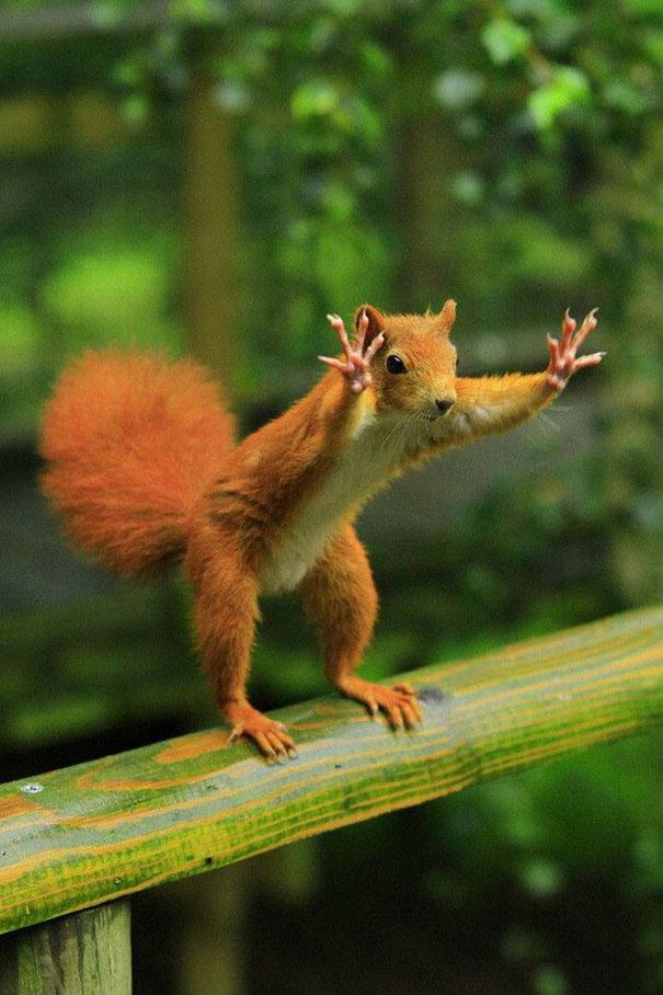 بالصور صور حيوانات مضحكة , اضحك مع لقطات نادرة وطريفة للحيوانات 5978 16