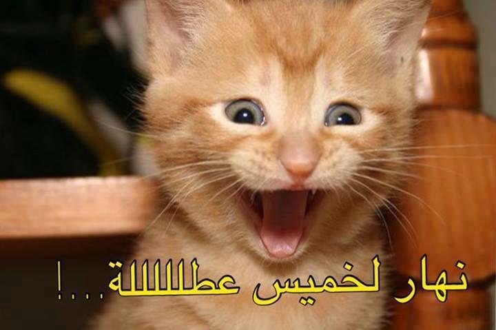 بالصور صور حيوانات مضحكة , اضحك مع لقطات نادرة وطريفة للحيوانات 5978 6