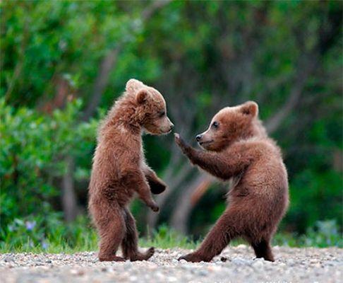 بالصور صور حيوانات مضحكة , اضحك مع لقطات نادرة وطريفة للحيوانات 5978 7