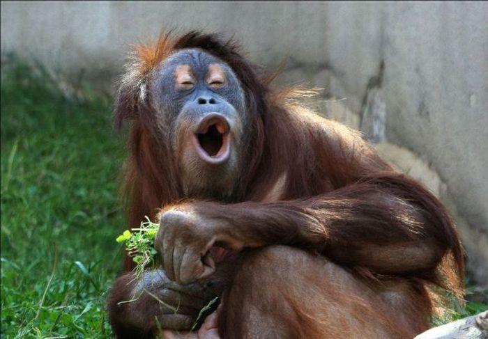 بالصور صور حيوانات مضحكة , اضحك مع لقطات نادرة وطريفة للحيوانات 5978 8