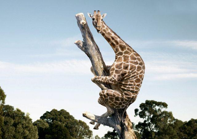 بالصور صور حيوانات مضحكة , اضحك مع لقطات نادرة وطريفة للحيوانات 5978