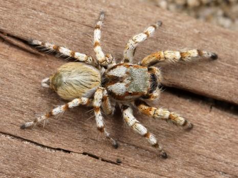 صورة تفسير رؤية العنكبوت , رايت فى المنام عنكبوت