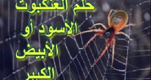 بالصور تفسير رؤية العنكبوت , رايت فى المنام عنكبوت 13460 2 310x165