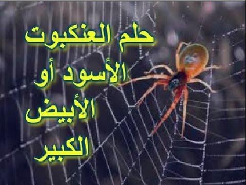 صور تفسير رؤية العنكبوت , رايت فى المنام عنكبوت