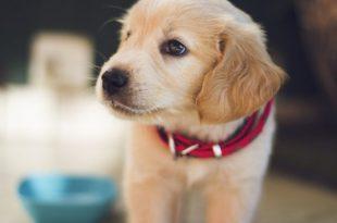 صورة الجرو في المنام , رايت كلب صغير فى الحلم