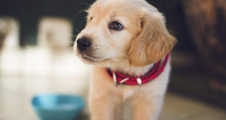 صور الجرو في المنام , رايت كلب صغير فى الحلم