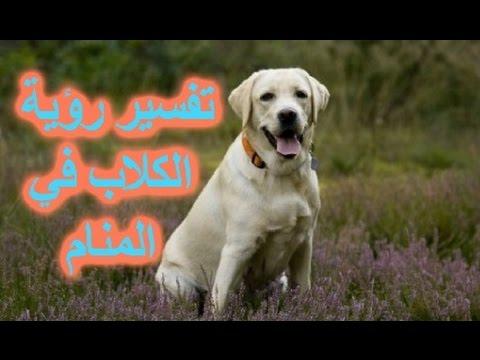بالصور تفسير الحلم بالكلاب , اخاف من الكلب فى الحلم 13628 2