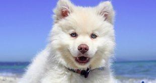 صور تفسير الحلم بالكلاب , اخاف من الكلب فى الحلم