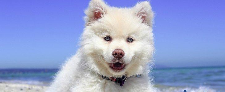 صورة تفسير الحلم بالكلاب , اخاف من الكلب فى الحلم