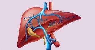 صورة ما هي انزيمات الكبد , ما فوائد انزيمات الكبد
