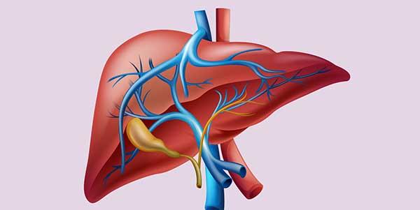 صور ما هي انزيمات الكبد , ما فوائد انزيمات الكبد
