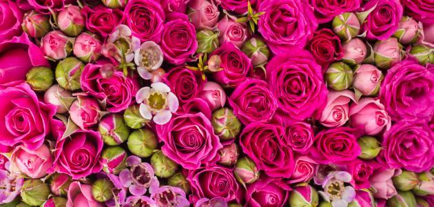 بالصور الورد في المنام لابن سيرين , ما اجمل الورد 13674 1
