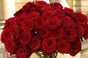 صورة الورد في المنام لابن سيرين , ما اجمل الورد