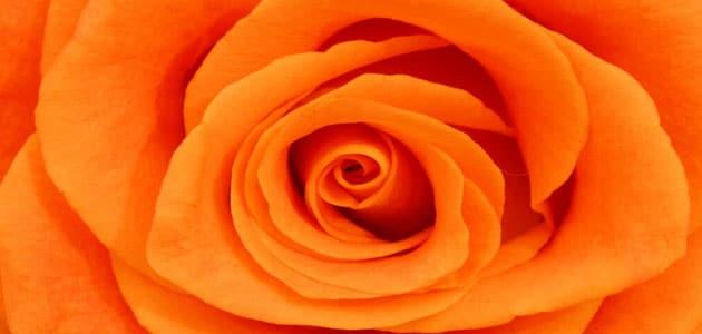 بالصور اللون البرتقالي في المنام , ما معنى هذا اللون 13707 2