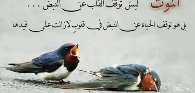 صور اجمل ما قيل على الفيس بوك , اجمل عبارات الفيس